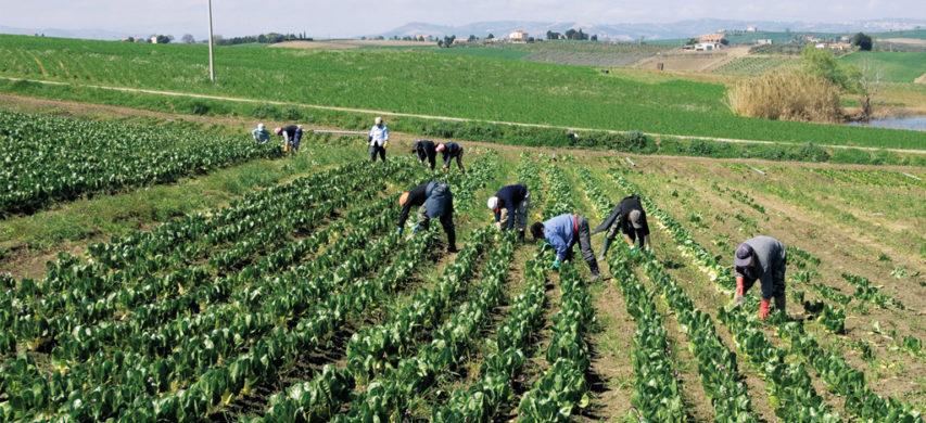 agricoli braccianti